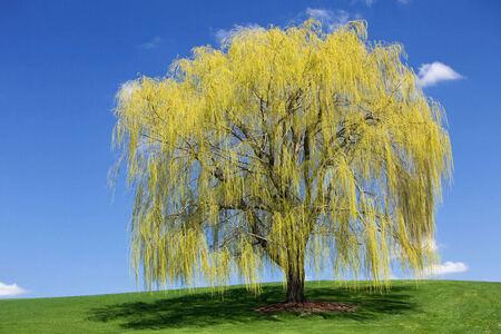 10 Самых быстрорастущих деревьев в мире