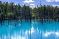 Затонувшие леса — одни из самых необычных мест на Земле