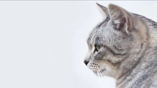 20 забавных фактов о кошках, которые вы не знали