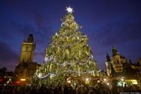 Топ 7 самых больших и красивых елок мира