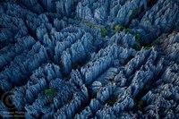 Каменный лес на западном побережье Мадагаскара