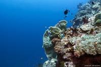 Подводный мир (22 ФОТО)