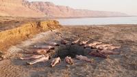Фотосессия голых людей на фоне мертвого моря