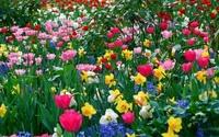 Весенние цветы (12 ФОТО)