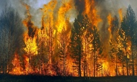 Лесные пожары в России 2010 (Forest fires in Russia)