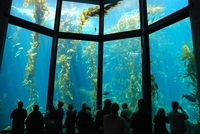 Веб камера аквариум Монтерей-Бей (Webcam Monterey Bay Aquarium)