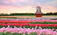 Кёкенхоф — тюльпанная столица мира