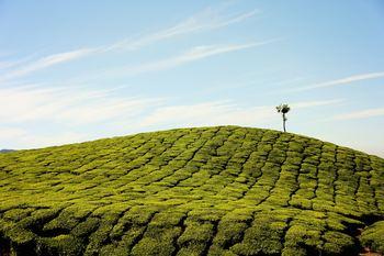 Топ-30 самых красивых мест Индии (30 of the most amazing places in India)
