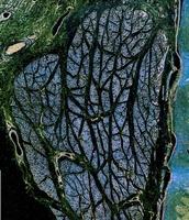Olympus BioScapes: живые организмы под микроскопом (19 фото)