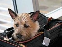 Правила перевозки домашних животных на самолете