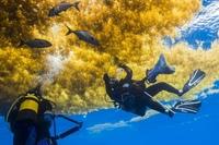 Саргассово море: загадочное море Атлантики