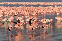 Птичье озеро – Накуру