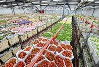 Цветочный аукцион в Алсмере