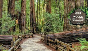 Мьюирский лес (Muir Woods) — национальный заповедник