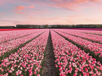 Нидерланды: путешествие по достопримечательностям (Netherlands Travel Attractions)