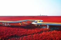 Красные берега Ляохэ (The Red Beach in Panjin, China)