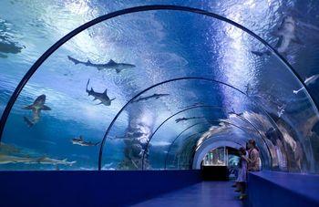 Аквариум Осаки Кайюкан — один из самых впечатляющих аквариумов Японии