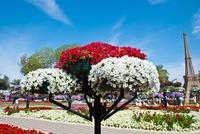 Самый большой цветочный парк — Al Ain Paradise (Эль-Айн. ОАЭ)