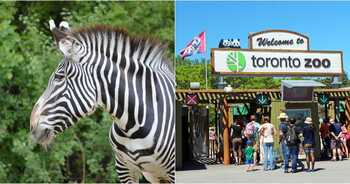Зоопарк Торонто (Toronto Zoo)